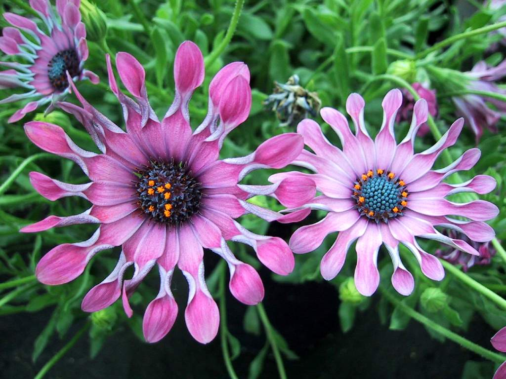 Fondos escritorio flores ex ticas for Imagenes de jardines exoticos
