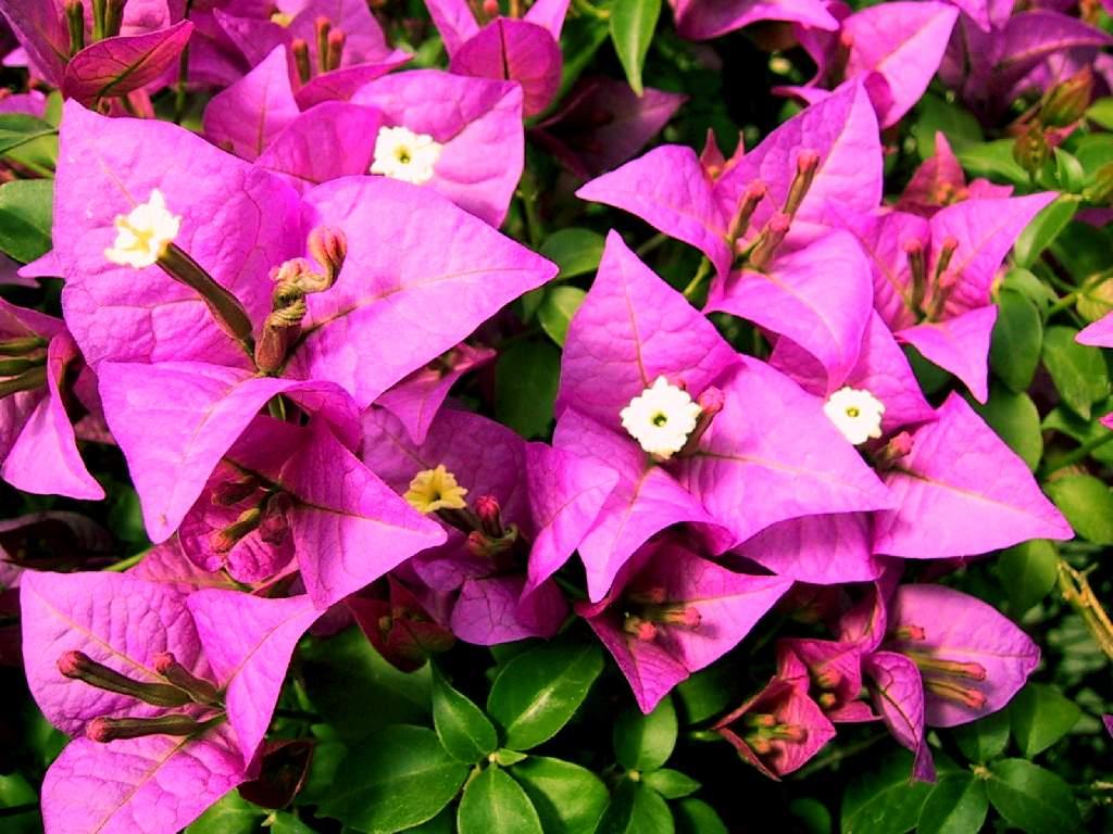 Flores exoticas muy lindas taringa - Flores tropicales fotos ...