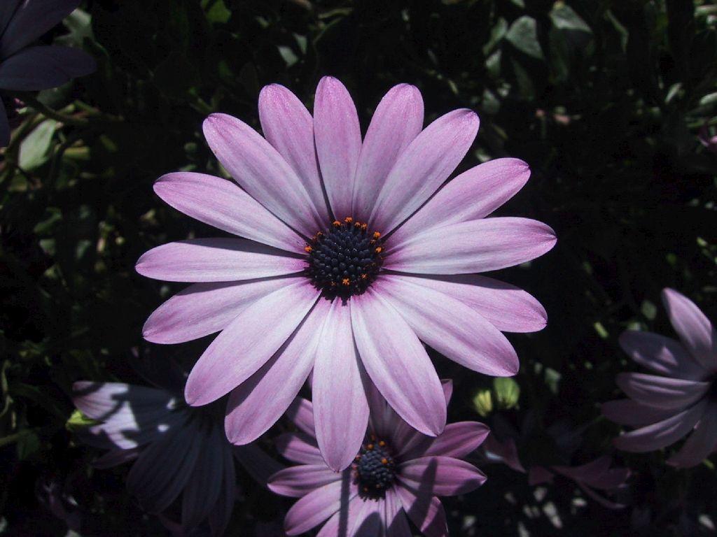 Fondos escritorio flores de campo sencillas for Imagenes de recamaras sencillas