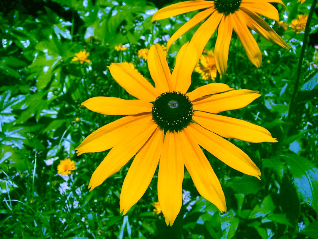 Sfondi per lo schermo fiori di giardino gialli - Fiori di giardino ...