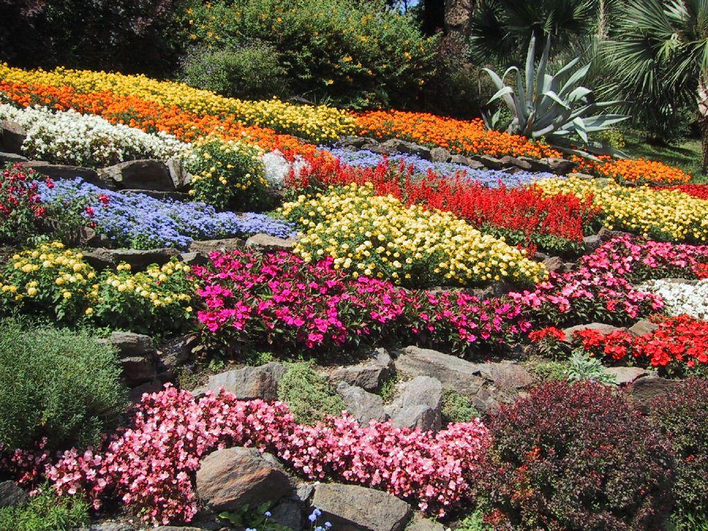 Image gallery jardin de flores hermosas for Jardines de exterior