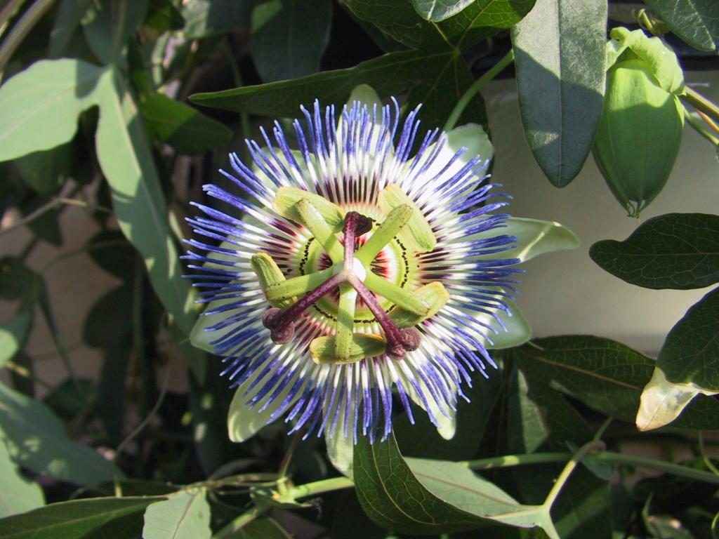 Imagenes De Flores Fotos De Flores Exoticas Raras Hermosas