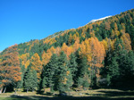 M126 (270203 byte) - Autumn in the Roseg Valley
