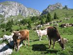 M252 (368602 byte) - Pasture at Malga Pozzetto in Presolana (1399mt)