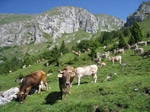 M253 (371251 byte) - Pasture at Malga Pozzetto in Presolana (1399mt)
