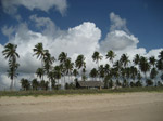 S120 (186411 byte) - Palms on the beach to the North of Porto de Galinhas