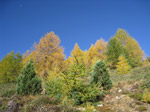 F169 (327559 byte) - Autunno in Val Viola/SO