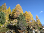 F171 (343005 byte) - Autunno in Val Viola/SO